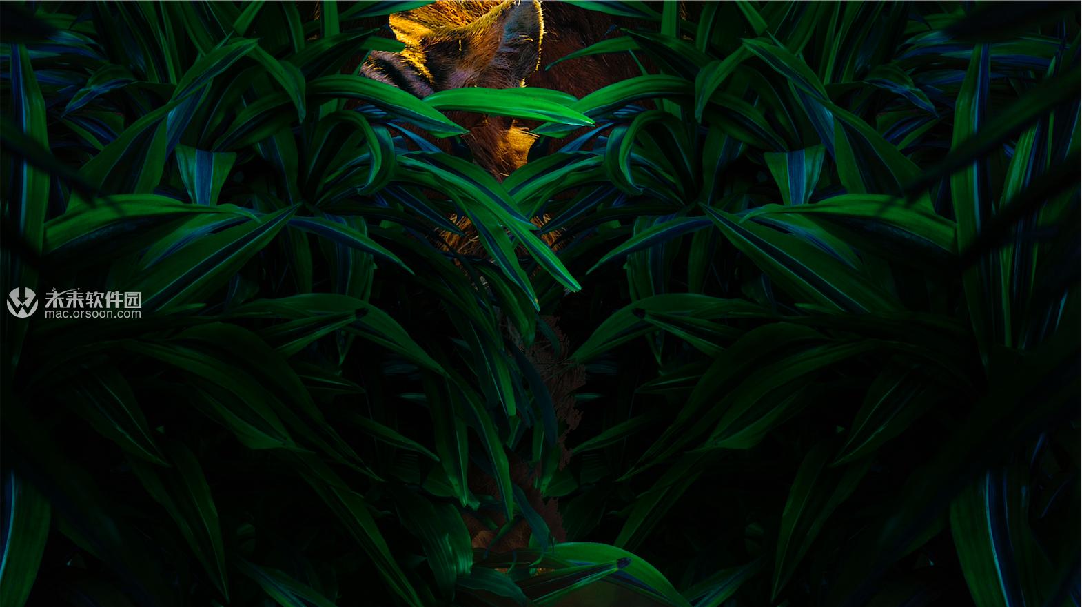 丛林中的猛虎动态桌面壁纸