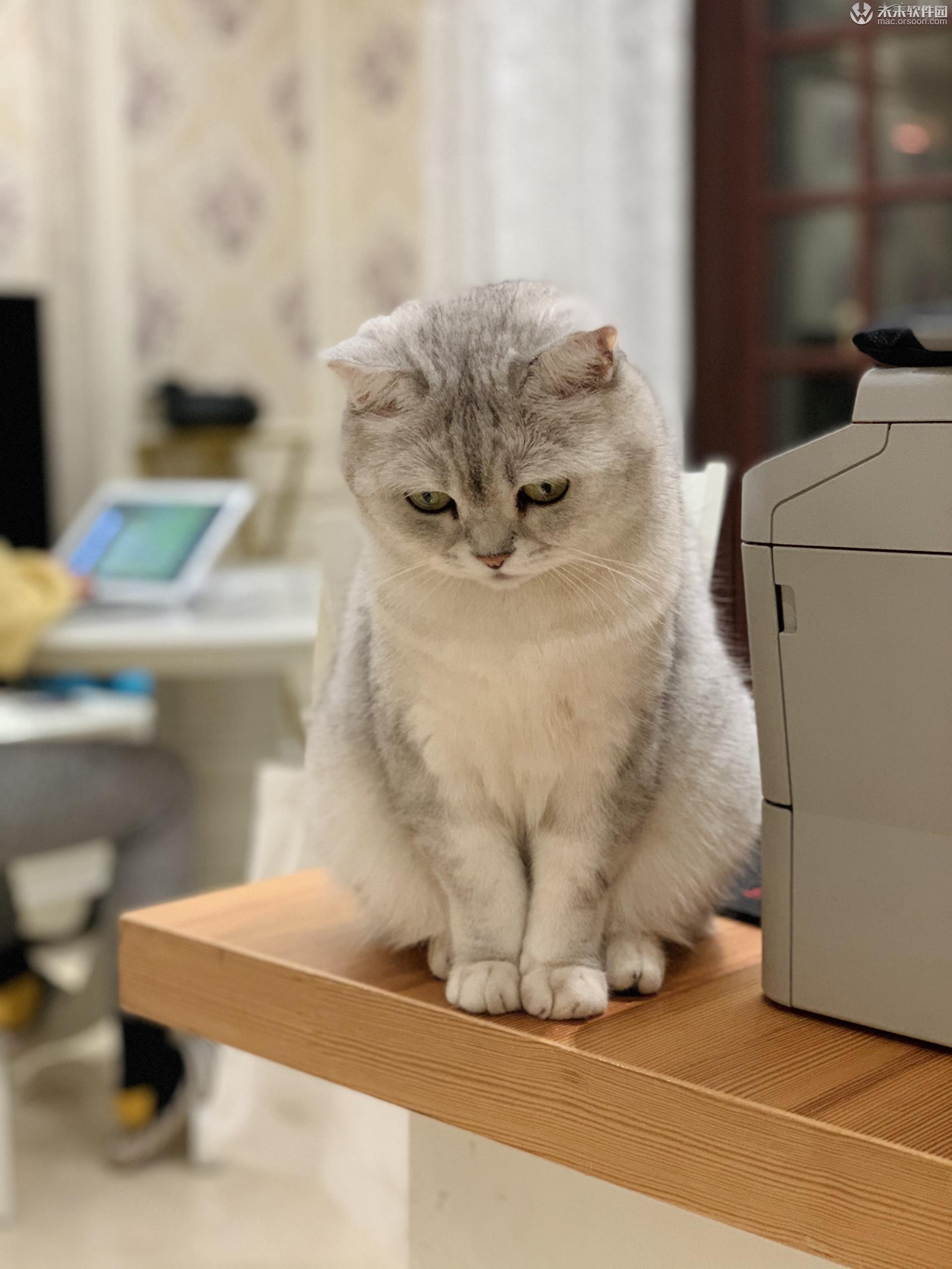 猫咪高清动态壁纸
